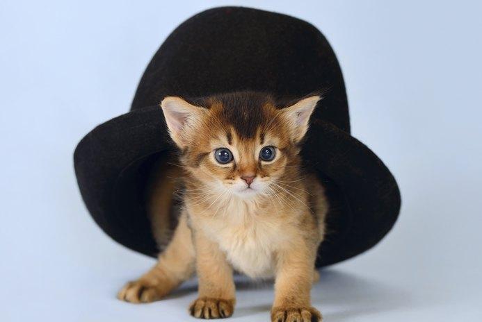 Kitten Toy Ideas