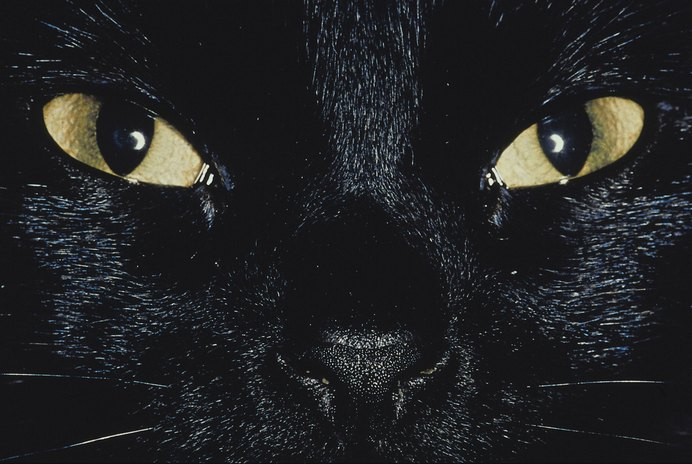 What Shape Is a Cat's Pupil?
