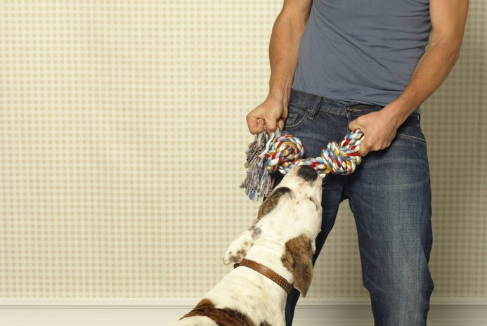 How to Stop a Dog From Eating Baseboards