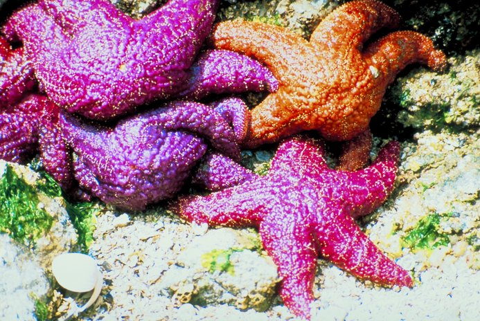 Owning a Starfish