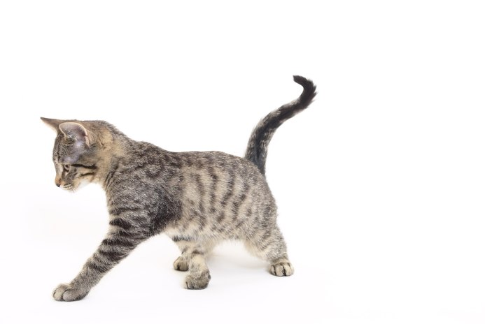 Why Is a Cat Chasing Its Tail?