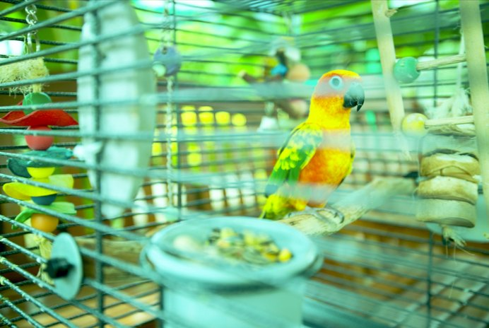 How to Keep Cats Away From Parakeets