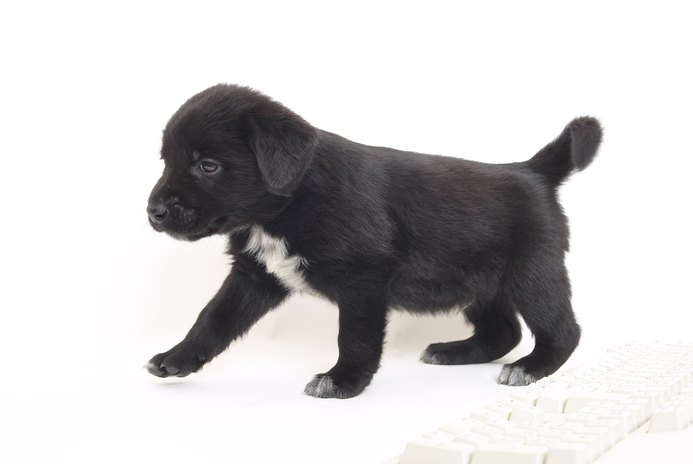 What Is Unstable Gait in Puppies?