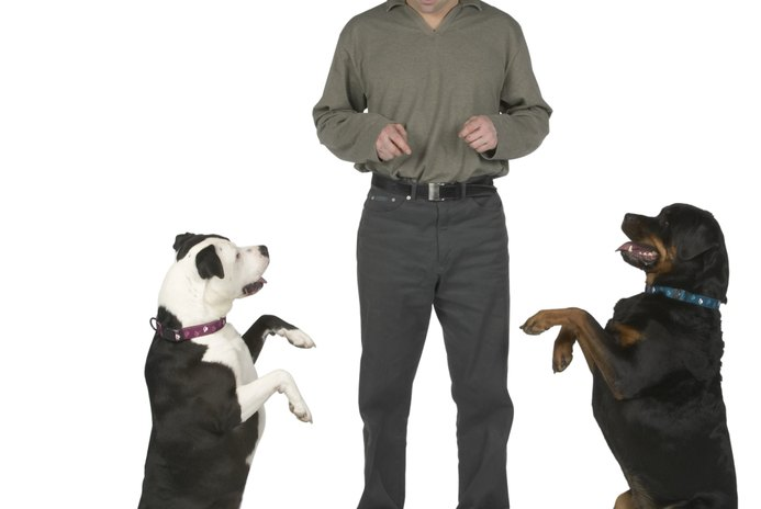 Do Dogs Prefer to Have Another Dog for Companionship?