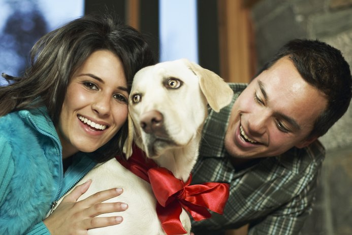 Christmas Collars for Dogs
