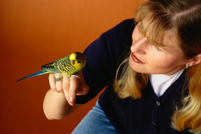 Canary vs. Parakeet for a Pet