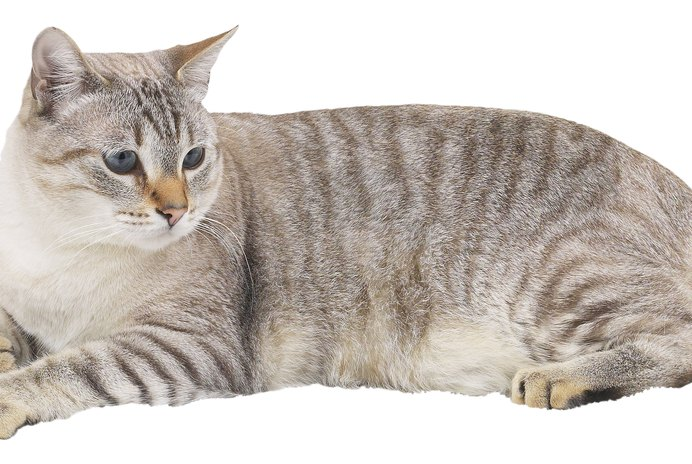 How Long After Cats Are Neutered Are the Hormones Gone?