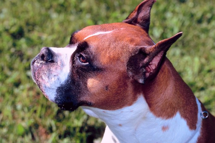 Shedding Times for Boxers