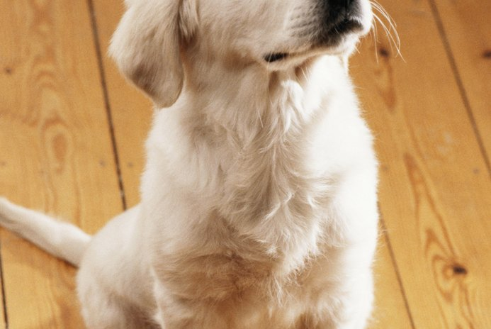 How to Remove Dog Urine Stains From Oak Flooring