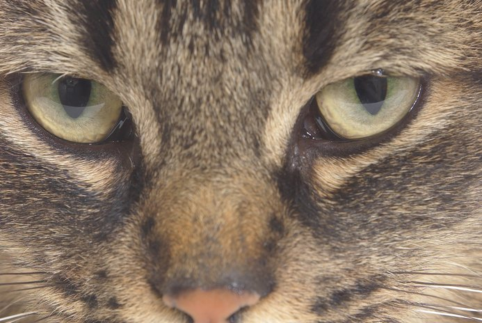 What Causes Cats to Attack & Bite?