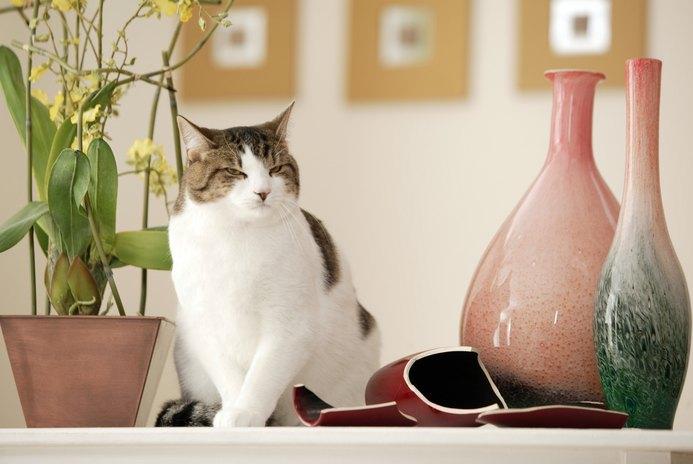 How to Cat-Proof Houseplants