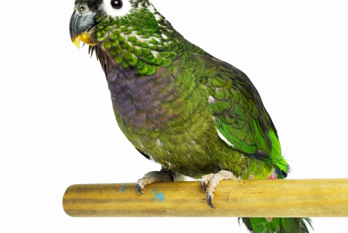 The Best Parrots for Beginners