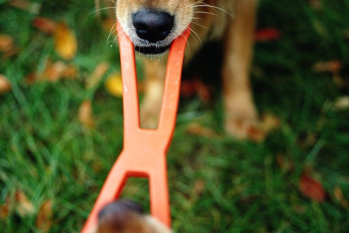 How to Teach an Unwilling Dog to Play Tug of War