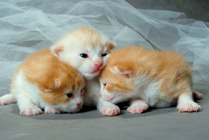 Mother Cat Needs to Produce More Milk for Kittens