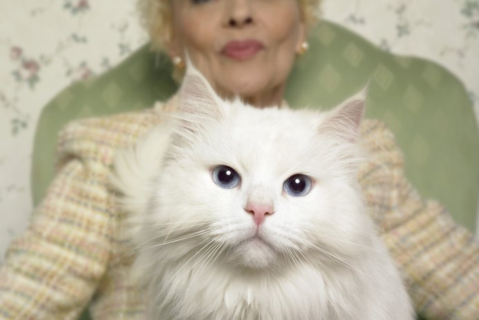 Excessive Eye Draining & Infection in Persian Cats