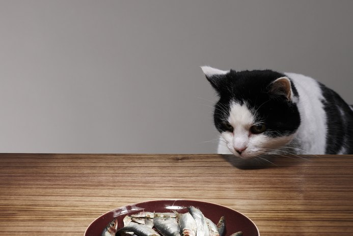 Can Tuna Fish Cause CRF in Cats?