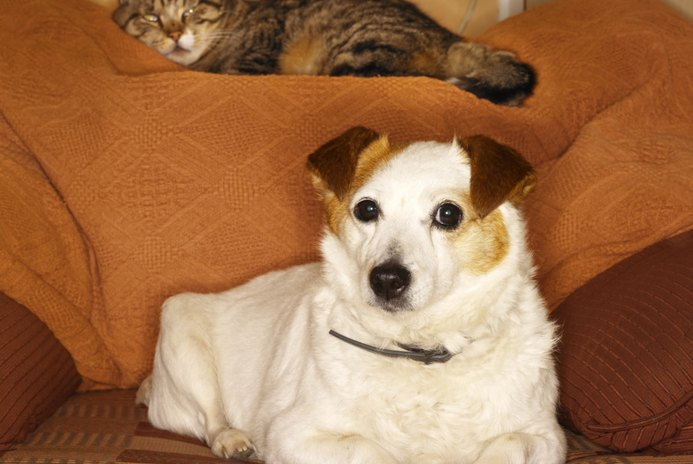 How to Make an Older Dog Stop Growling at Cats