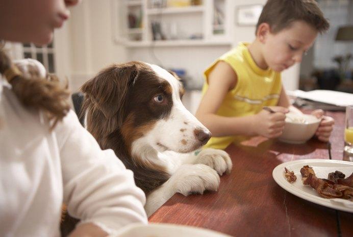 All-Natural Dog Food Recipes