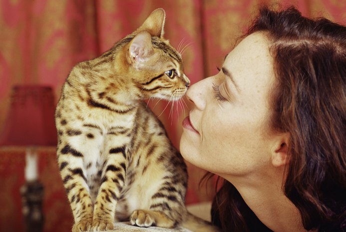 Do Cats React to Human Hormones?