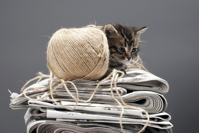 Why Do Cats Like to Lay on Newspapers?