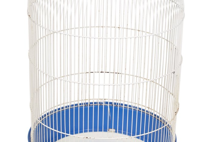 Cage Size for Cockatiels