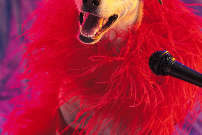 How to Get Your Dog in Show Business