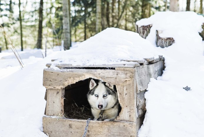 How to Build a Large, Insulated Dog House
