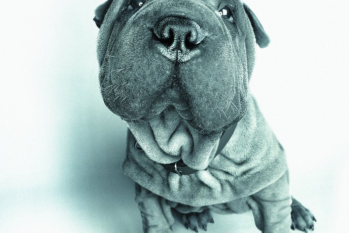 How Often Do You Bathe and Brush the Coat of a Shar-Pei?