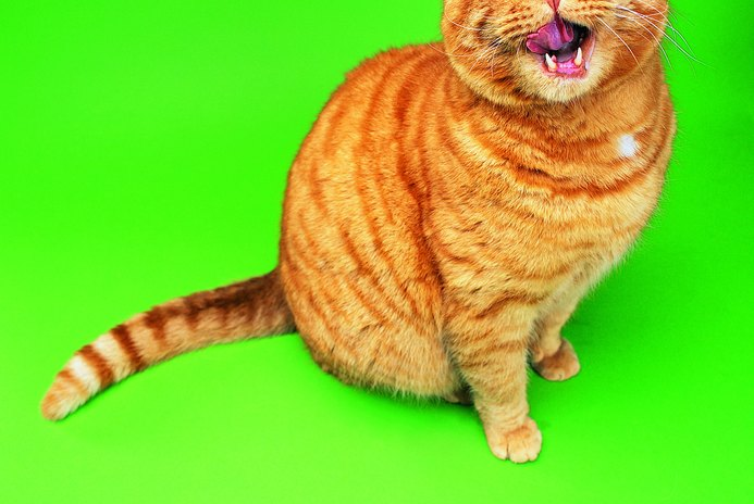 Tongue Injury in Cats