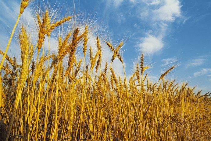 Can Gluten Intolerance Symptoms Wax and Wane?