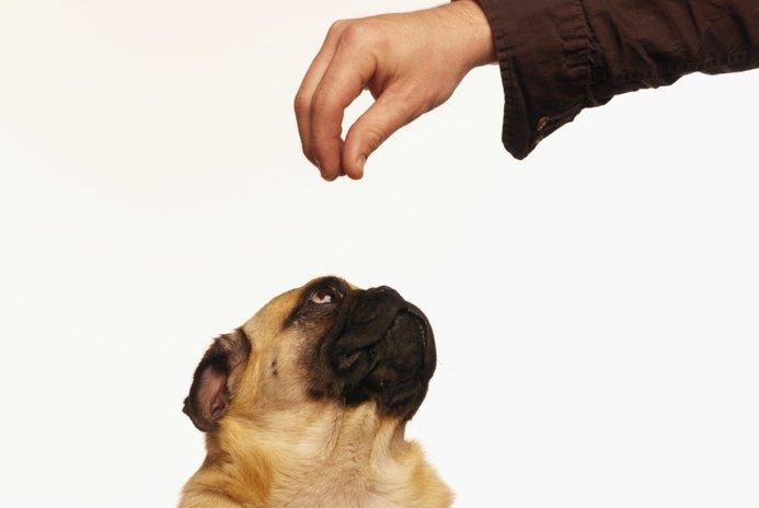 Pugs & Blindness