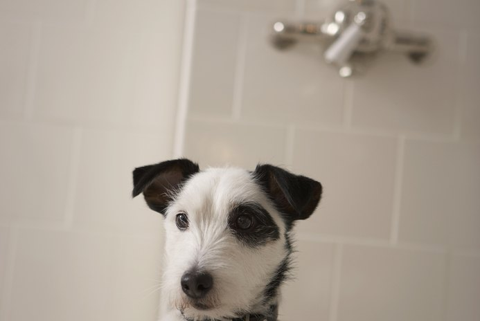 Hypoallergenic Conditioners for Dogs