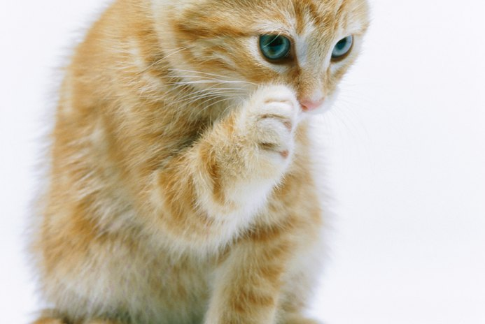 Can Cats Die From Fleas?