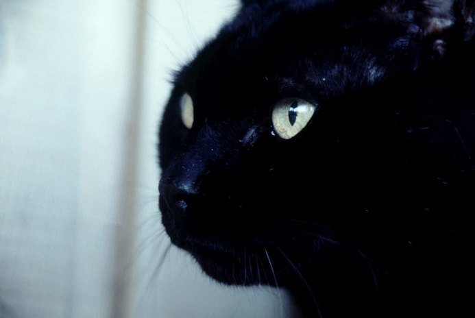 Relieving the Swollen Nasal Passages in Cats