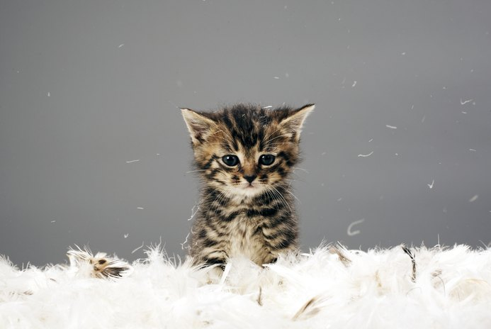 Can Kittens Become Too Attached to Humans?