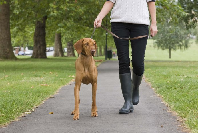 The Average Hourly Salary of Dog Obedience Instructors