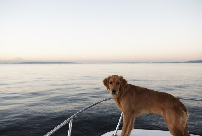 How to Use a Life Jacket for Dogs