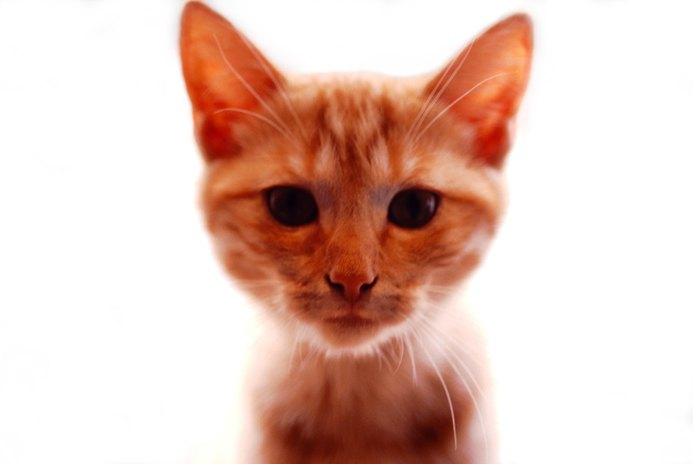 What Is the Difference Between Orange Cats & Tabby Cats?