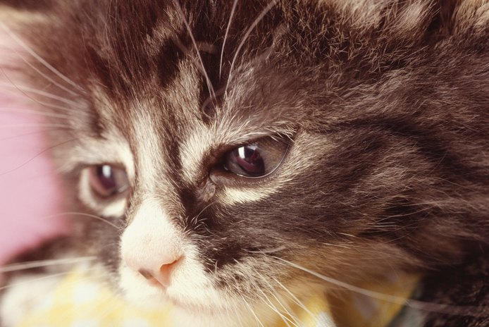 Can a Cat's Feelings Get Hurt?