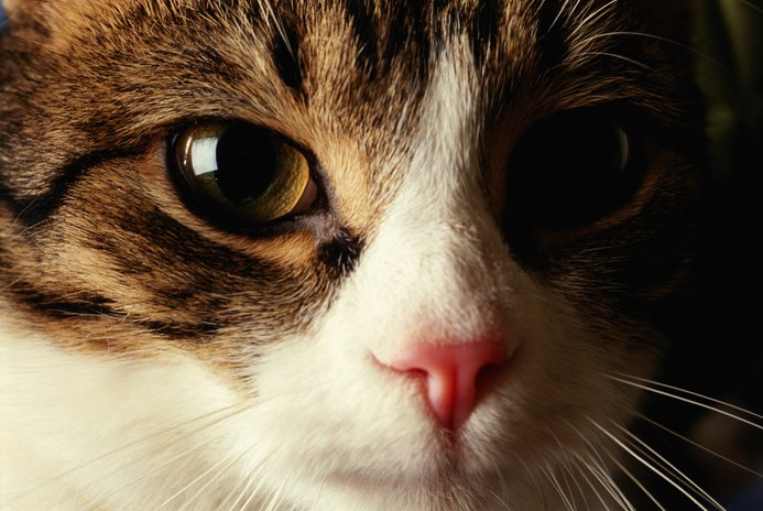 Chronic URIs in Cats