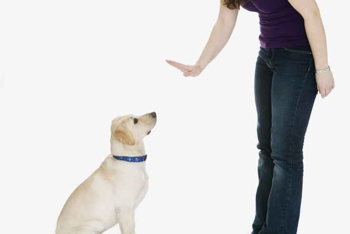 How Long Can a Dog Be Punished After Bad Behavior?