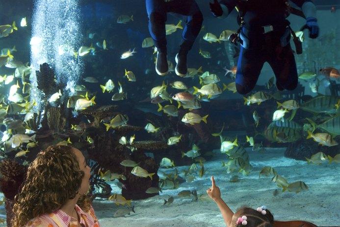 Freshwater Aquarium Design Ideas