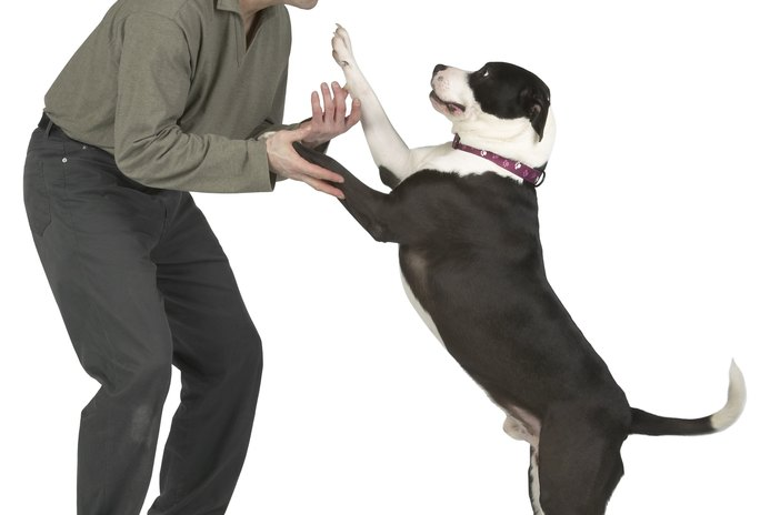 What Does It Mean When Dogs Push You Away?