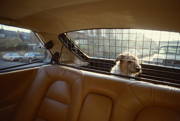 How to Cure Whining Dogs in a Car