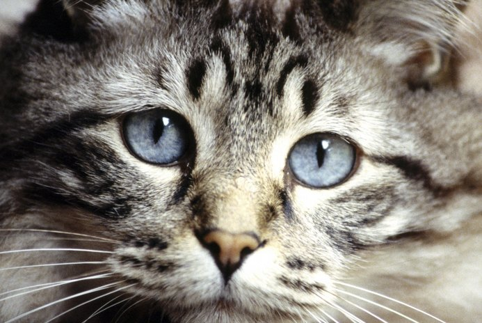 Can Cats Become Depressed When One Dies?