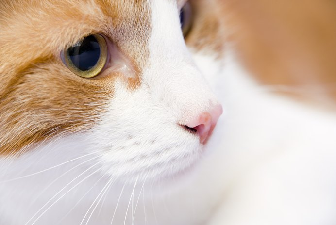 Extreme Eye Dilation in Cats