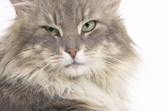 Cat Diseases From Eating Live Mice