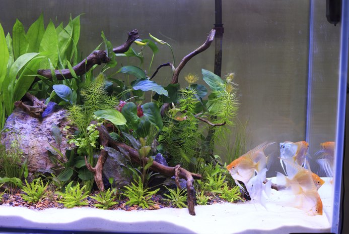 New Aquarium Checklist