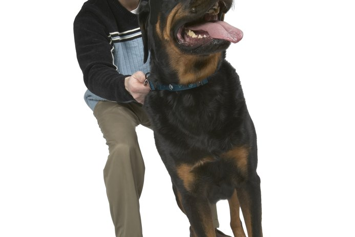 When Does a Rottweiler Stop Growing?