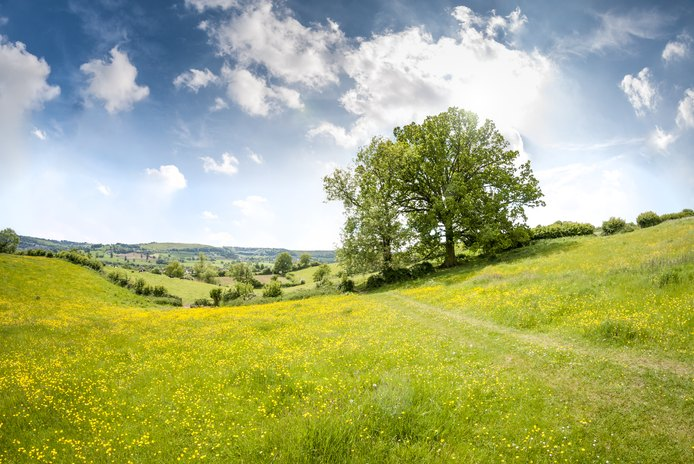 Is Raw Land a Good Investment?